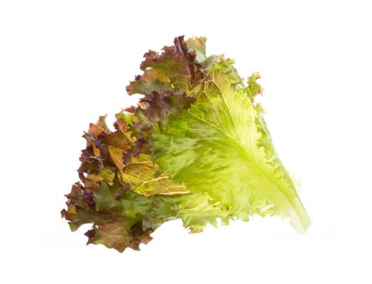 Sėklų kapsulės Tregren Lollo Rosso salotos, 2 vnt