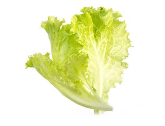 Sėklų kapsulės Tregren lapinės salotos, 2 vnt